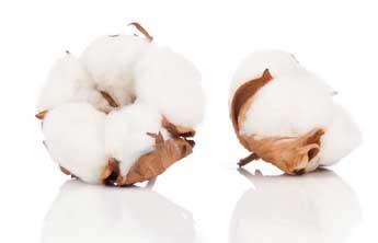 Wohlfühlen mit Baumwolle